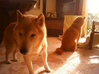 悩む犬_b0011075_20523216.jpg