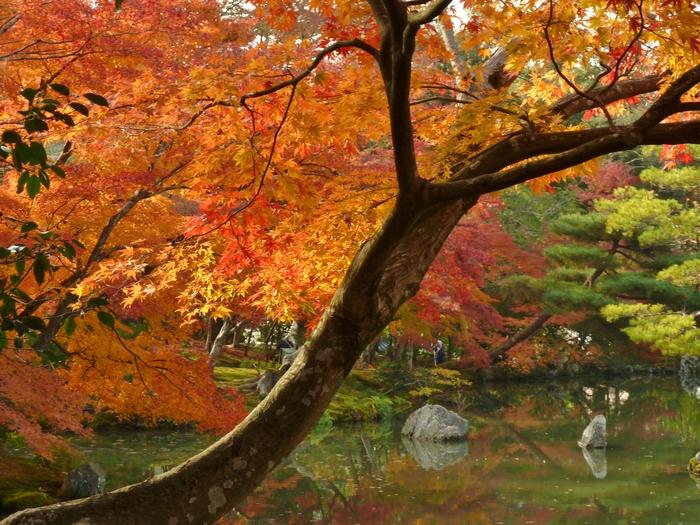 晩秋の京都 26_b0093088_1529121.jpg