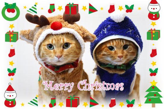 Merry Christmas_d0071596_22475353.jpg