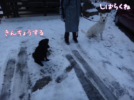 五郎の記憶ファイル_f0064906_15555336.jpg
