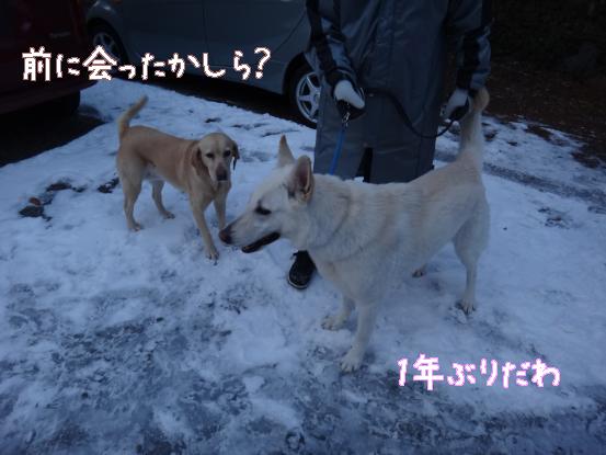 五郎の記憶ファイル_f0064906_15572811.jpg