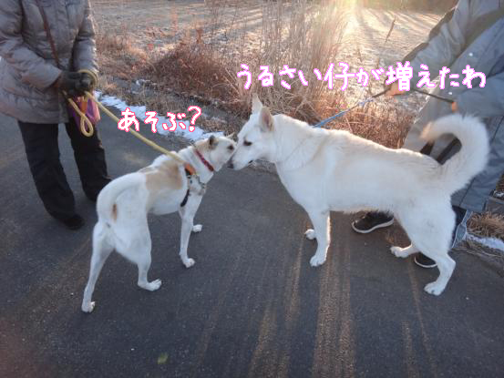 五郎の記憶ファイル_f0064906_16141584.jpg