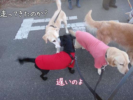五郎の記憶ファイル_f0064906_16282969.jpg