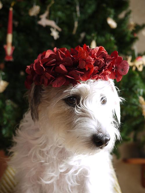 merry Christmas_f0032814_1835818.jpg