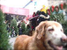 ニューヨークからMerry Christmas☆_a0110515_22355340.jpg