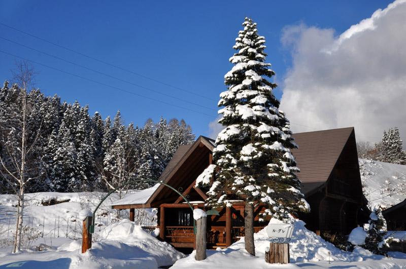 天然のクリスマスツリー_e0162117_16382183.jpg