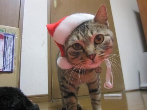 Last Christmas_e0229436_124770.jpg