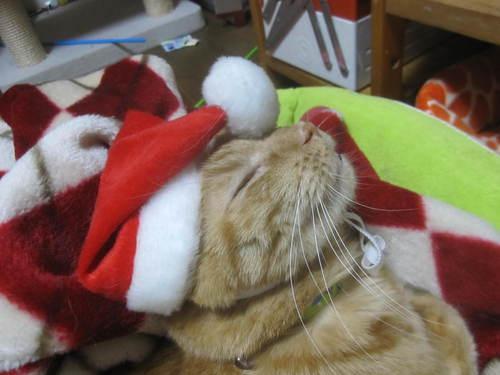 Last Christmas_e0229436_1275113.jpg