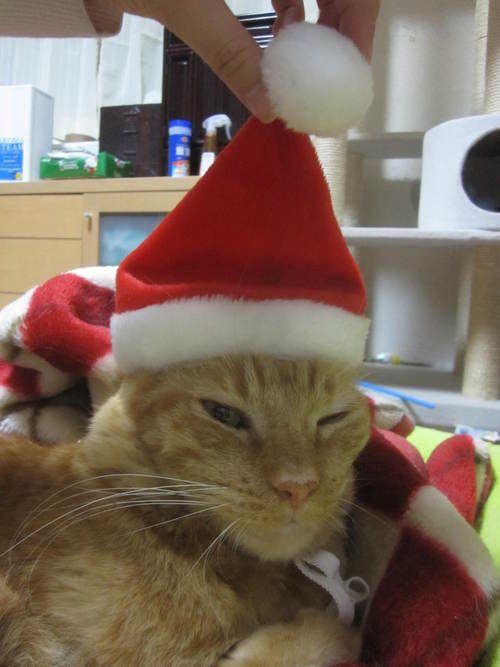 Last Christmas_e0229436_129746.jpg