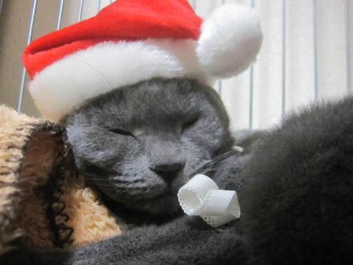 Last Christmas_e0229436_1302919.jpg