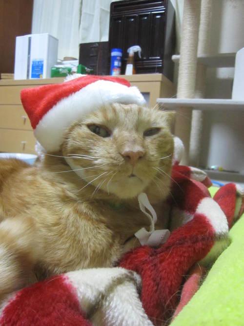 Last Christmas_e0229436_1401614.jpg