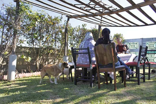 モロッコ原産アトラス犬の仔犬たち_e0092286_17213965.jpg