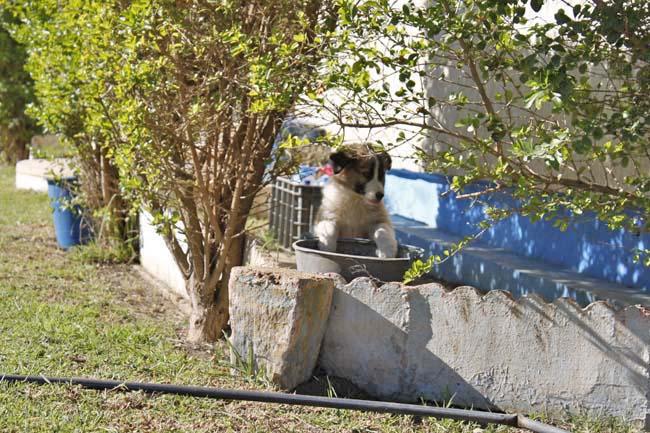 モロッコ原産アトラス犬の仔犬たち_e0092286_1772837.jpg