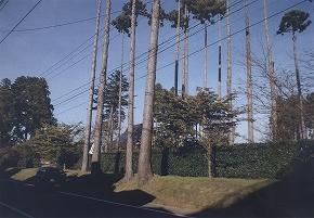a0137997_2002498.jpg