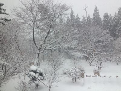どこも雪でしょうね?_e0054299_13161125.jpg