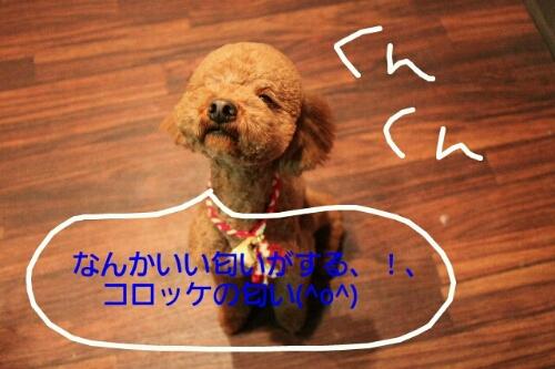 b0130018_22562667.jpg