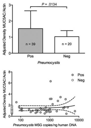 新生児死亡肺にニューモシスティスが高頻度に存在、MUC5AC発現が増加_e0156318_10574181.jpg