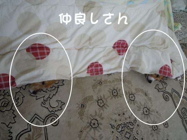 c0166622_18405380.jpg
