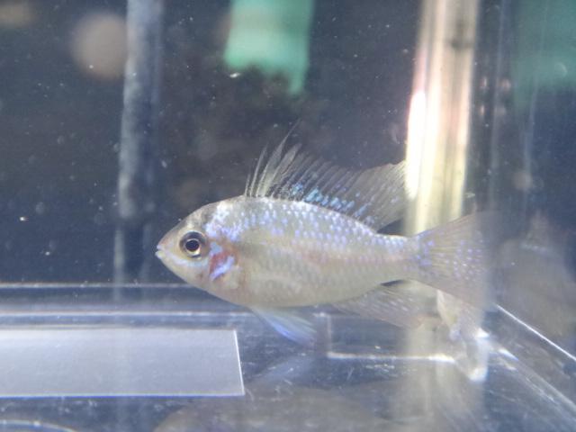 121226 海水魚・熱帯魚・侘び草・水草_f0189122_12443257.jpg