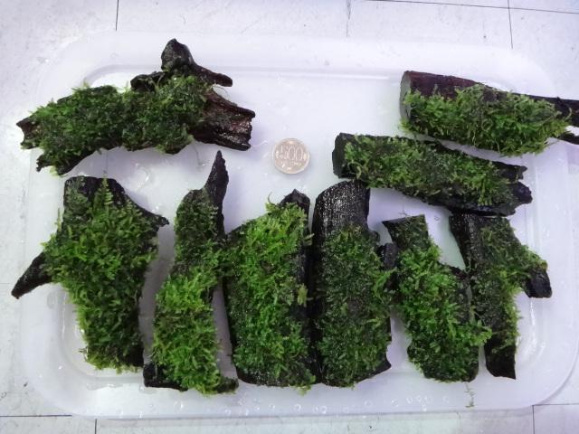 121226 海水魚・熱帯魚・侘び草・水草_f0189122_12563687.jpg