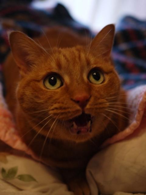 メリークリスニャス猫 しぇる編。_a0143140_0254627.jpg