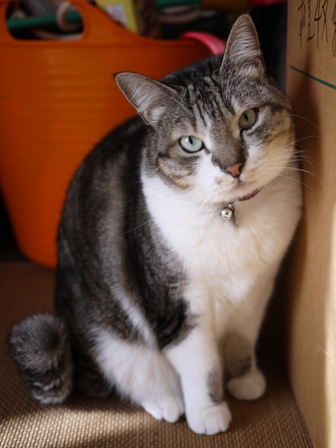 猫のお友だち オリーブちゃんキティちゃんタマくんなおくん編 + 犬のお友だち ミニーちゃん編。_a0143140_23253060.jpg