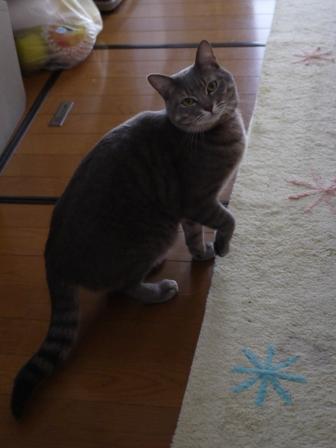 猫のお友だち オリーブちゃんキティちゃんタマくんなおくん編 + 犬のお友だち ミニーちゃん編。_a0143140_23255240.jpg