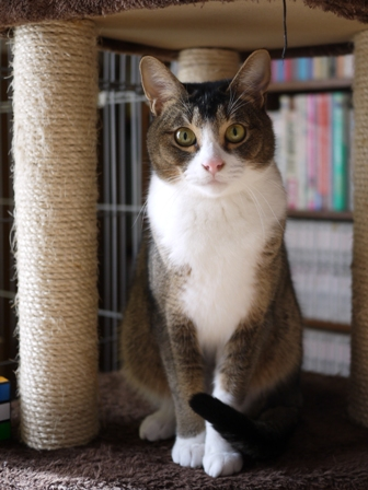 猫のお友だち オリーブちゃんキティちゃんタマくんなおくん編 + 犬のお友だち ミニーちゃん編。_a0143140_23261756.jpg