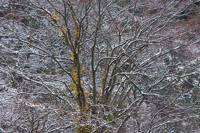 来日岳にて ~雪飾り~_c0067040_2239828.jpg
