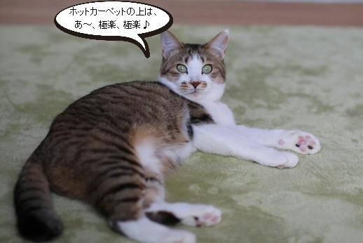 今日の保護猫さん達_e0151545_2245921.jpg
