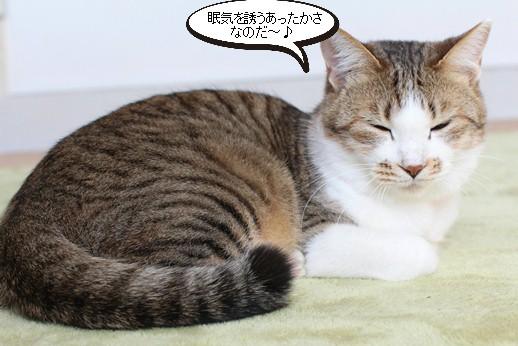 今日の保護猫さん達_e0151545_2261192.jpg