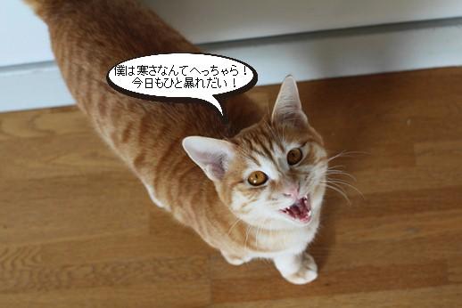 今日の保護猫さん達_e0151545_2263989.jpg