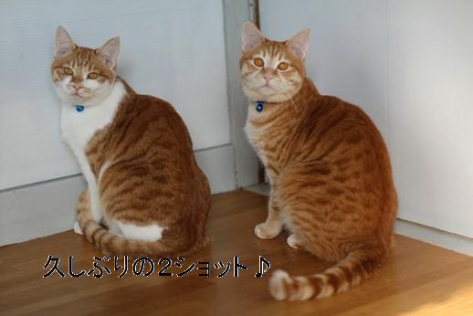今日の保護猫さん達_e0151545_2285168.jpg