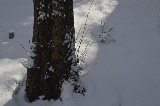 雪の候(5)_c0093046_963434.jpg