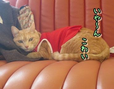 シンプルなクリスマス_b0151748_12195324.jpg