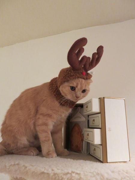 Merry Christmas!_c0108595_0563277.jpg