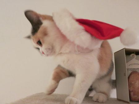 Merry Christmas!_c0108595_057666.jpg