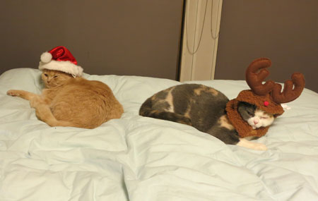 Merry Christmas!_c0108595_111543.jpg