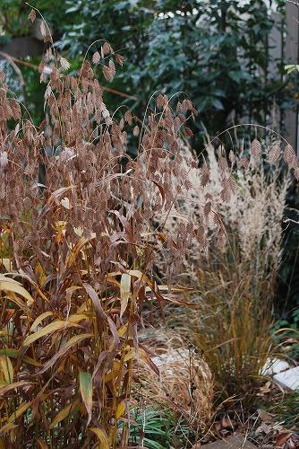 12月の庭…_c0124100_0121116.jpg