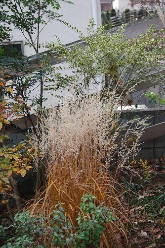 12月の庭…_c0124100_0123952.jpg