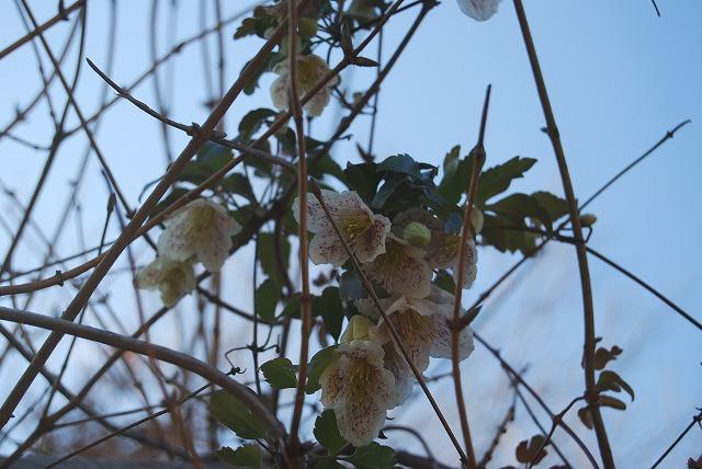 12月の庭…_c0124100_012554.jpg