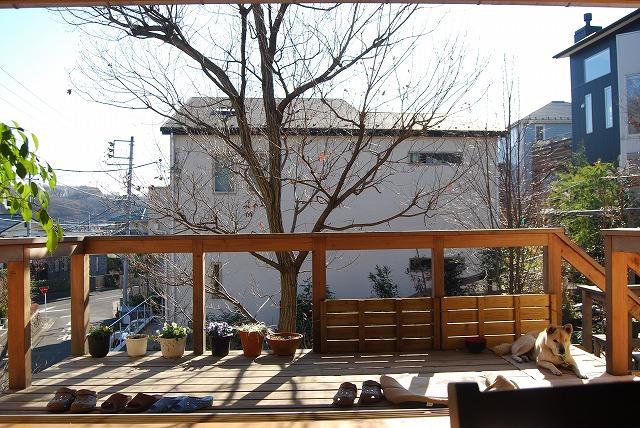 12月の庭…_c0124100_044996.jpg