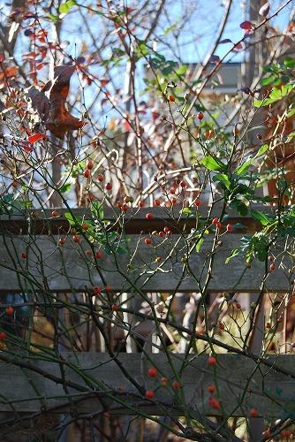 12月の庭…_c0124100_06397.jpg