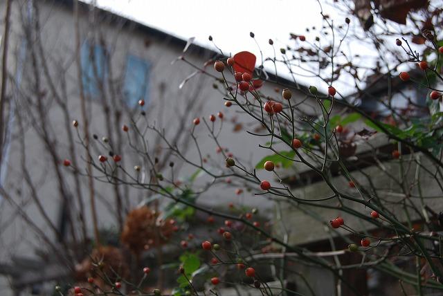 12月の庭…_c0124100_064784.jpg