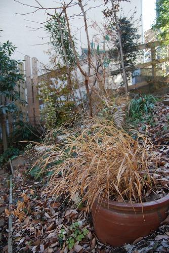 12月の庭…_c0124100_0747.jpg