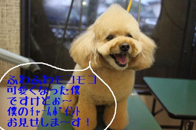 b0130018_126258.jpg