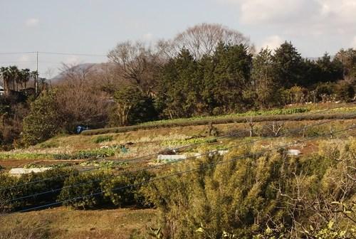 今年最後の野菜畑......みかんの収穫も_b0137932_18563821.jpg