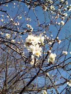 寒桜の季節に_a0103940_332253.jpg