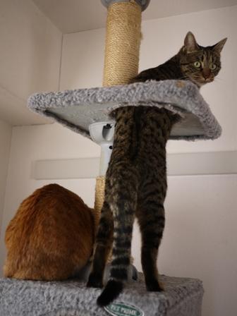 猫のお友だち ちゃーくんちょびくんペコちゃん編。_a0143140_23104241.jpg