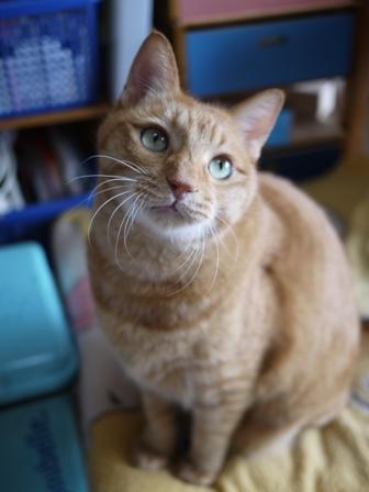 猫のお友だち ちゃーくんちょびくんペコちゃん編。_a0143140_2355568.jpg